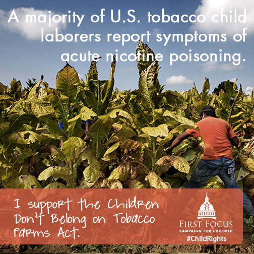 Tobacco Child Labor C